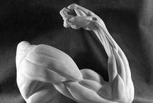 anatomy arm and leg