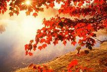 Bonjour l'automne / En automne, l'éclat des couleurs et la mutation de la nature est une source d'inspiration infinie pour le Laboratoire Léa Nature.