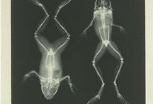 °‿•✿ Scienze-vertebrati