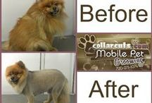 Dog Before and Afters / Take a look at our before and after shots of our happy customers.