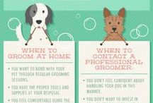 Grooming Tips / Learn more about grooming techniques and needs to better your dog's health and wellness.