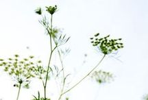 greens / gardens, plants, green, borders, flowers,