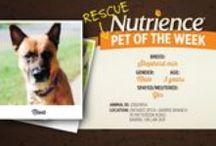 Pet of The Week / Nutrience's Pets of the Week