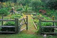 Záhrada - nápady