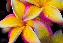 Flowers/ Floristry