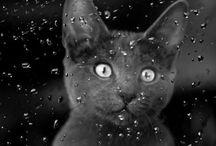 art&cat