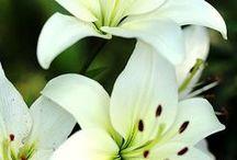 Virágok / Kvety