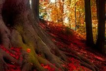 Changing Autumn Scenery