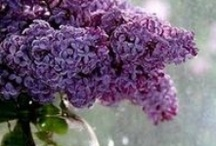 garden wishes / by Barb Bennett