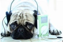 My tunes / Time to start my concert.... / by Mimi