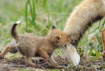 животные / uważam, że zwierzęta są znacznie lepsze od ludzi, więc tablica jest dla nich...