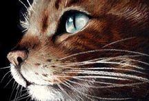 Domestic Animal Art | Drawing Inspiration / Drawings of domestic animals for inspiration. Pencil and Pastel paintings of cats and dogs