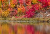 Autumn | Splendor / I love the show of color in the Autumn season