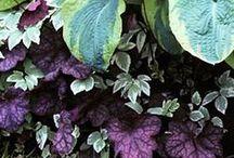 Garden Ideas / by Karen Egeberg