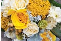 "Yellow & Grey Wedding Flowers / Beautiful shades of yellow, greys & silver. Craspedia ""billy balls"", succulents, Dahlias, Ranunculus & Silver Brocade. / by Angela Adlard Floristry"