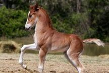 Creatures | Horse Heaven / Equine Love!