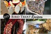 GARDEN Birds & Birdhouses ♥ / Wild bird care, facts, and garden art featuring nests, birdhouses, birdfeeders, birdbaths, bird-related outdoor decor plus tips and ideas for keeping birds safe. / by Melissa @EmpressOfDirt.net  ❤
