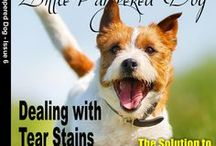Magazine Covers / Little Pampered Dog Issues
