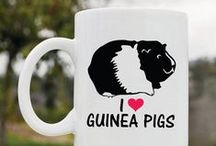 Piggies! / All things guinea pig :)