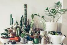 // plantlife