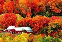 Automne/Autumn, Fall