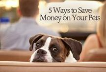 Frugal Pets / Great ideas for not just saving money caring for your pets but keeping things clean and green, too.