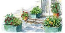 Secret City Gardens / Urban Homesteads | Front Yard Gardens | HOA-Proof Gardens | City and Suburban Gardening