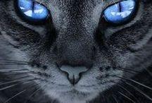 ~  Cats  ~
