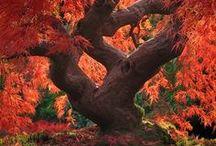 ~  Trees ~
