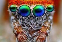 ~  Colourful Creatures ~