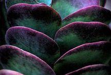 ~  Succulents ~