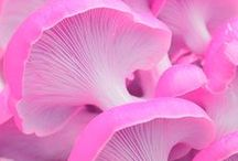~ Fungi ~