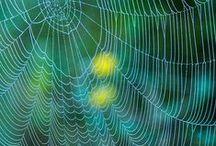 ~  Spider Webs ~