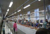 Markthallen / Markets
