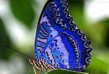 ~  Butterflies ~