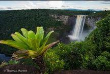 Rainforest / Rainforest