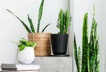 Green at Home + garden and patio
