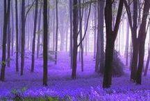 ~ Fields of Flowers ~