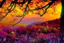 *BEAUTIFUL! / by Denise Callahan