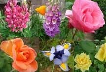 *Flowers / by Denise Callahan