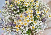 Blumen Fotografie ★ Flower Photography / Schöne Blumensträuße als Inspiration für die nächste frische Dekoration zu Hause oder als Fotovorlage für Dein nächstes Kunstwerk!