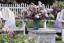 Gardens / Garden photos, creative tips for gardens and inspiration.