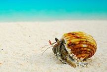 HERMIT CRABS / kids-children-learning-education-language-fun-hermit crabs