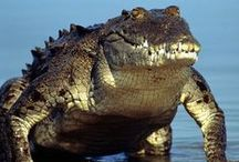 CROCODILES / kids-children-learning-education-language-fun-crocodiles