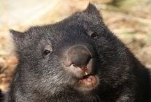 WOMBATS / kids-children-learning-education-language-fun-birds-rainbow lorikeets