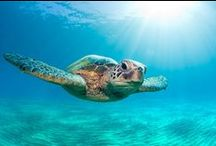 GREEN SEA TURTLES / kids-children-learning-education-language-fun-turtles