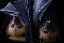 FRUIT BATS / kids-children-learning-education-language-fun-fruit bat