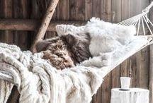 COZY things / Cozy, warm, sincere...:)
