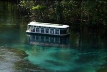 Florida Springs / Get ready to dive into some of Florida's most beautiful springs - all located in Ocala/Marion County!