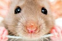 Mice / Love mice? This is the board for you. Every cute and funny mouse related image I can find is added to this board. Join me and squeeeee!